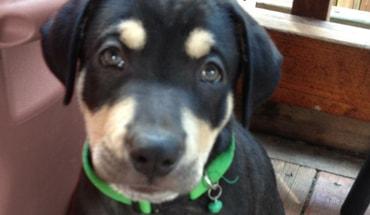 Portland Puppy Training Expert