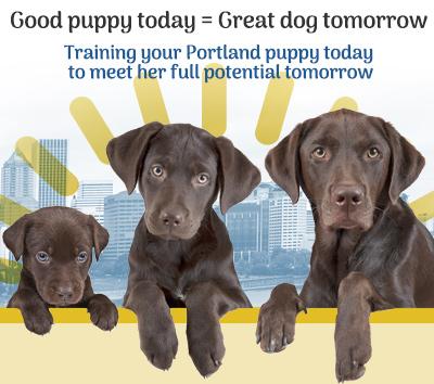 Portland Oregon Puppy Training