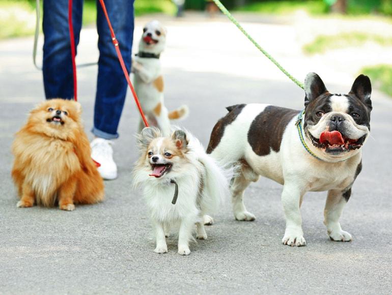 Portland Oregon Puppy Socials